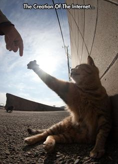 Creation of the internet #cat #meme