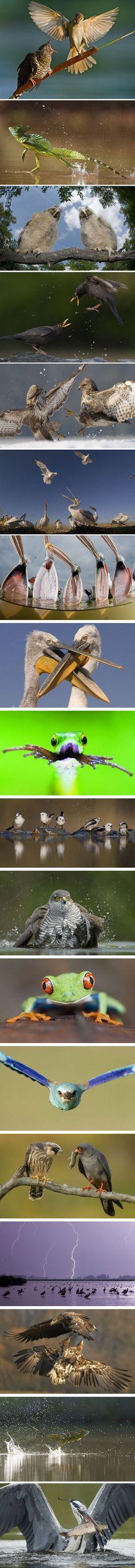 Wildlife Photographer Bence Mate