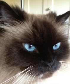 My cat Gracie. Jenny, Shoreline, WA. 12/12/12.