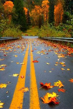 Leaf filled autumn road after a rainfall