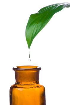 The Bigger Fatter List!  HUGE List of Ways to Use Essential Oils!!