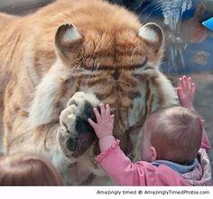 awwwww, big kitten...
