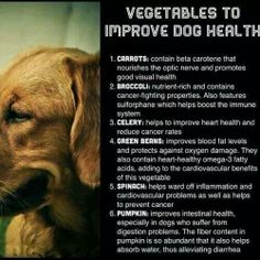 Great veggies for dogs