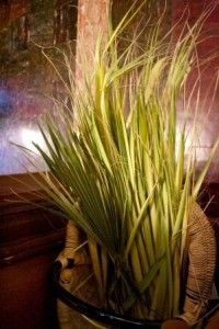 palm sunday, italianamerican