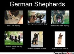 German Shepherds... - What people think I do, what I really do - Perception Vs Fact