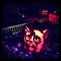 Grumpy (Cat) Gourd