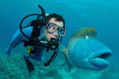 Best of 2013 Pictures!  fish-and-scuba-diver-funny-priceless-expression
