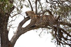 On #safari at Sala's Camp in the Masai Mara, Kenya - www.thesafaricollection.com