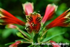 Red/Green by Kristyjphotography on Etsy, $25.00