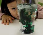 kiwi crate, sea salt, fresh water, preschool scienc, homeschool idea