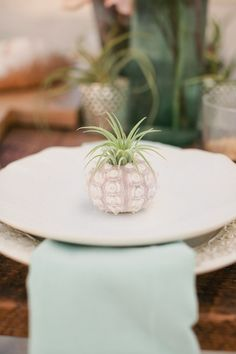 place settings with an air plant   shell for a beach wedding // photo by http://ChelseyBoatwright...