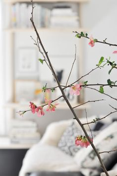 i wish quince blossomed all year round.