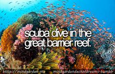scuba dive in the great barrier reef.