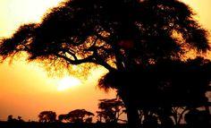 Sunset in Amboseli  Photo - Amboseli National Park, Kenya