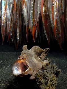 a frogfish and shrimpfish