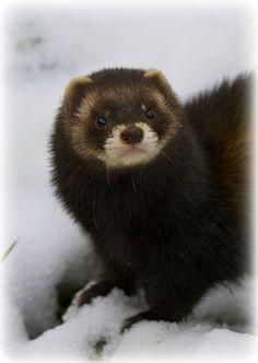 "Otter in His ""Fur Coat"" :)"