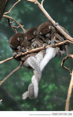 Tail hug...