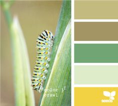 color crawl