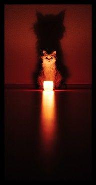 Cat summoning spirits