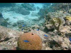 Looe Key Reef - Florida Keys