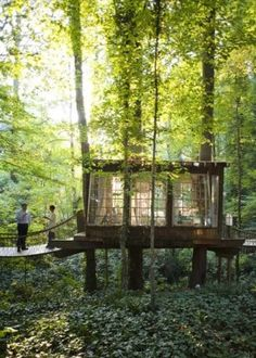 The dream: a treehouse studio with lots of light.