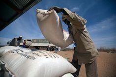 11 February 2014. Shangil Tobaya: A community member in Nifasha camp for Internally Displaced Persons (IDP), North Darfur, unloads a bag of sorghum from a World Food Programme (WFP) truck. Photo by Albert Gonzalez Farran, UNAMID - www.albertgonzalez.net