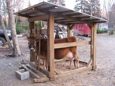 Mobile Milking Set Up For Family Cow? - Homesteading Today