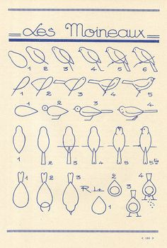 Learn to draw birds