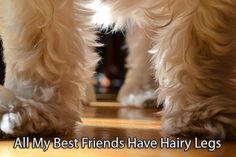 hairy-legged friends :)