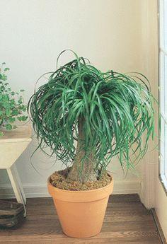 indoor plants low to med light on pinterest green. Black Bedroom Furniture Sets. Home Design Ideas