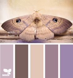 I hate moths, but love these colors