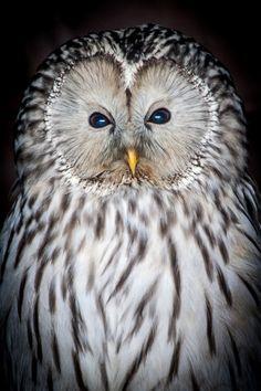 """Owl"" by Tim McAndrew"