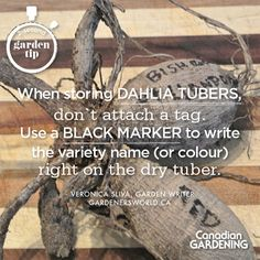 2-second garden tip by Veronica Sliva (gardenersworld.ca) about storing dahlia tubers over the winter.