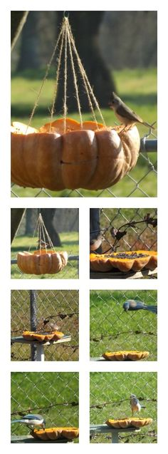 Today I had many happy visitors♥ with the Pumpkin bïrd feeder idea! :)