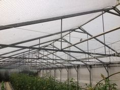 A greenhouse structure covered with Poly Keder, Polydress® SolaWrap™ since it was erected 25 years prior. Just think of the savings not only to your bottom line but to the environment as well. Each time non biodegradable greenhouse covering is replaced, it remains in landfills forever. Typically very expensive grade, greenhouse plastic sheeting is effective for up to 10 years or so.