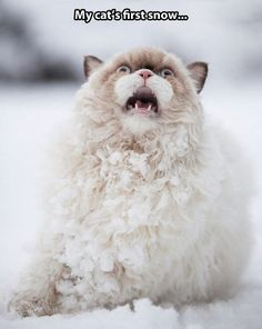 Enjoying the first snow // funny pictures - funny photos - funny images - funny pics - funny quotes - #lol #humor #funnypictures