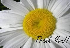 We would like to thank YOU for a GLORIOUS year! Our 2012 was awesome and we owe it all to YOU! We look forward to an amazing GARDENING season in 2013! ✿✿✿