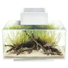 Fluval Edge, 6 gallon Aquarium with 21-LED Light, White