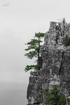 North Fork Mountain is a showpiece in a state renowned for it's beauty. Cabins, WV -steep climb