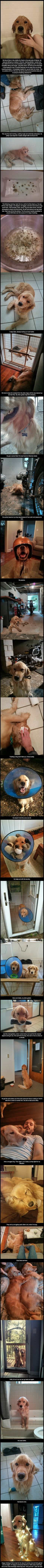 Such a sweet story (and pictures) of a guy who rescued a golden retriever this past summer who was just hanging out in the wilds of Atlanta.
