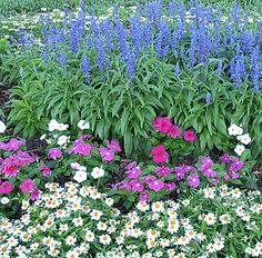 """Plants That Take the Heat - blue salvia, """"first kiss orchid halo"""" vinca, and white narrow leaf zinnia."""