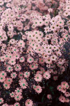Blossom ♡ //