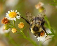 """Bee""""S"""