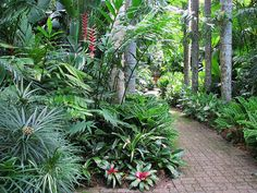 Tropical landscaping, Cairns Botanic Gardens by tanetahi, via Flickr