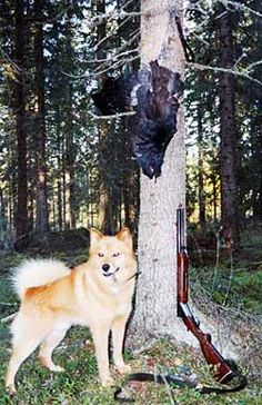 Shotgun, dog and capercaillie