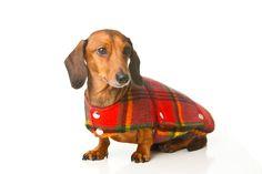 Mini dachshund tartan coat