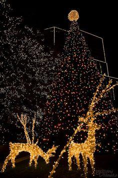 Christmas in Richmond::VA?