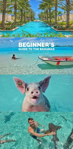 Bahamas beginner's travel guide with best things to do, see and stay. Includes swimming pigs, Exumas, nurse sharks, Baha Mar and more.