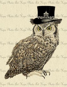 Black Top Hat Owl 85x11Image Transfer Collage  by HopePhotoArt, $1.25