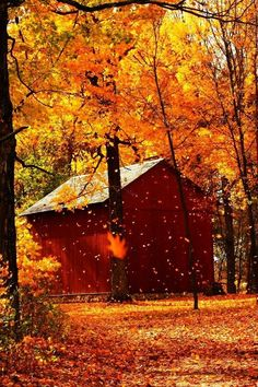 Wonderful pic of the falling leaves with the sunshine casting a golden glow over all.